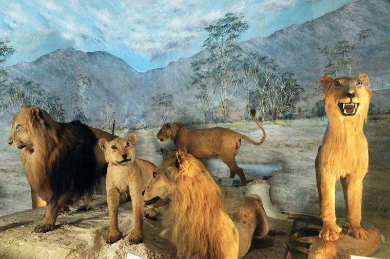 Ανοικτό αυτή την Κυριακή το Μουσείο Ζωολογίας του Πανεπιστημίου Αθηνών – Μια επίσκεψη για όλη την οικογένεια