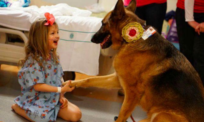 Θεσσαλονίκη: Το 424 Στρατιωτικό Νοσοκομείο είναι το μοναδικό που εφαρμόζει θεραπεία μέσω σκύλων